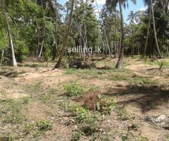 land for sell in Giriulla