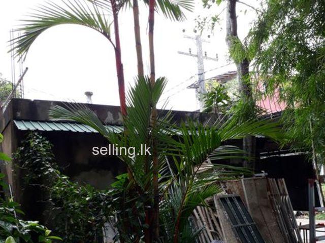Red Fram For Sale Dehiwala Selling Lk In Sri Lanka